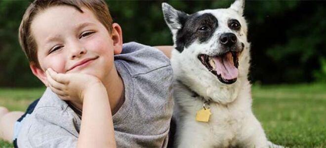 Что делать если после укуса собаки опухла рука и чем лечить