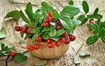 Можно ли употреблять бруснику при беременности, листья и отвар брусники от отеков