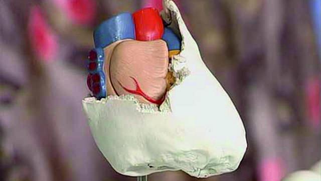 Панцирное сердце
