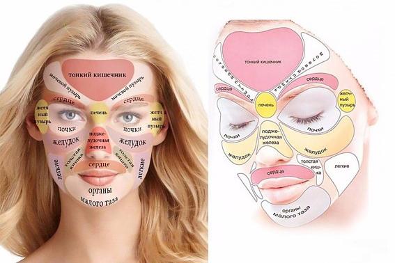 Схема работы органов на лице