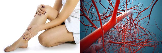 Кровеносная система и ноги