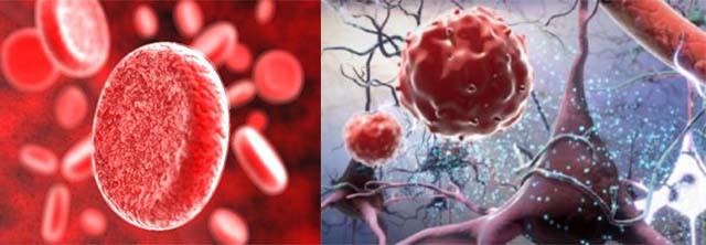 Общий белок в крови