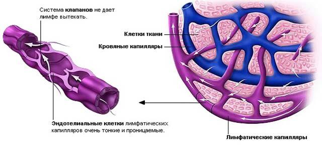 Лимфатические отеки и капилляры