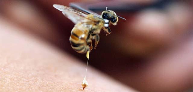Пчела улетает без жала