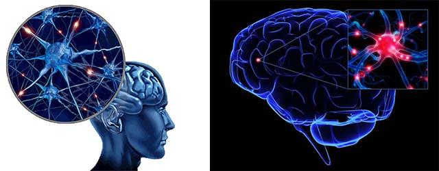 Мозг и голова человека