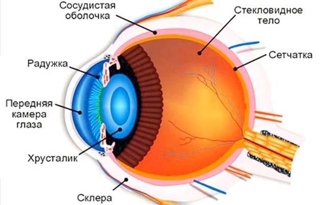 Структура глаза