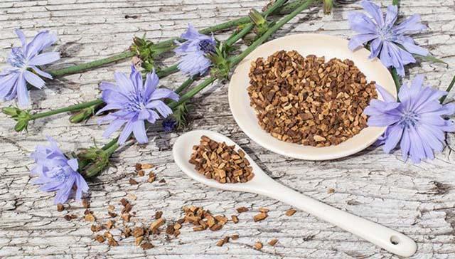 Корни и цветки цикория