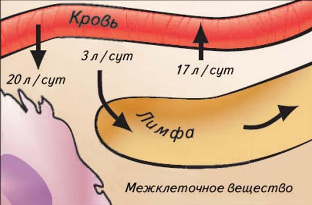 Межклеточное вещество