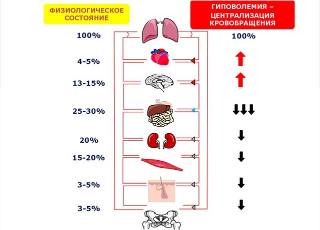 Централизация кровообращения