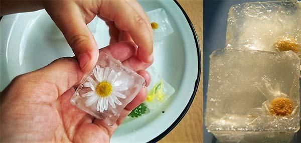 Кубики льда с ромашкой