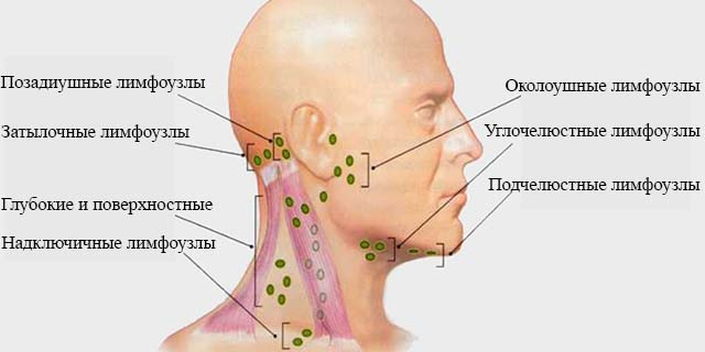 Расположение лимфоузлов на шее