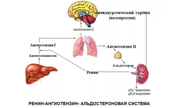 Альдостероновая система