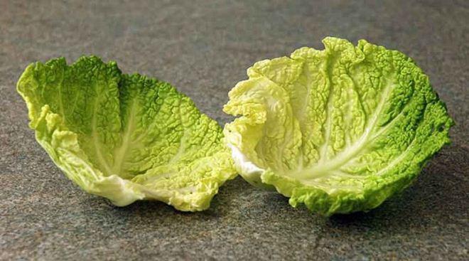 Компресс из капусты при варикоцеле